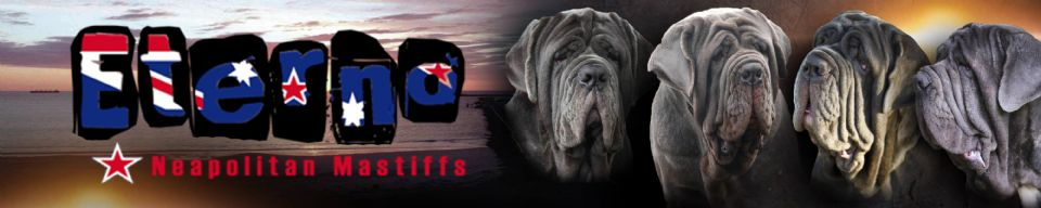 Eterno Neapolitan Mastiffs